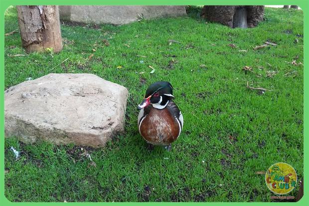 bird-gardens-05