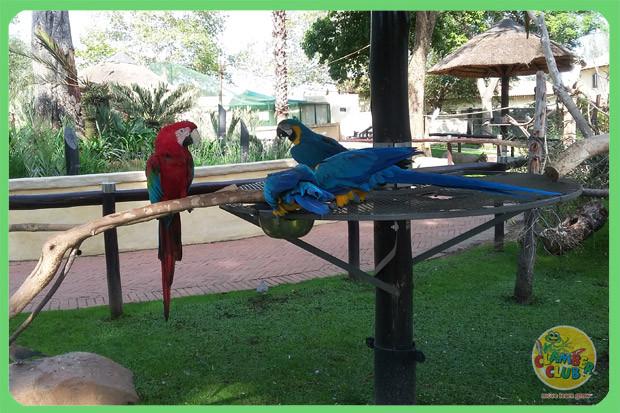 bird-gardens-07