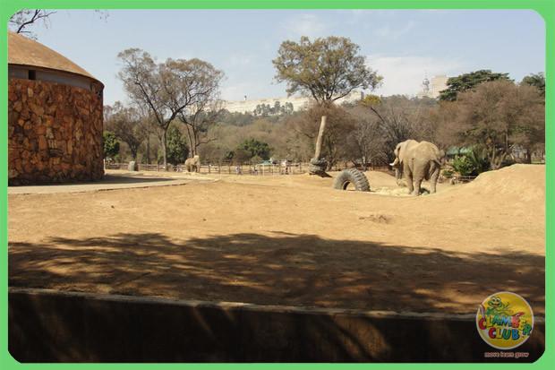 zoo-trip-08