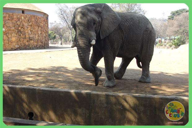 zoo-trip-09